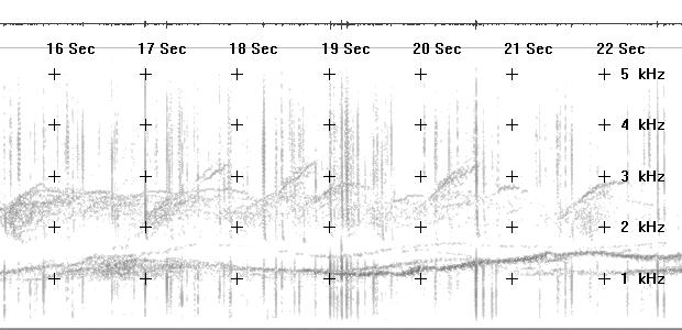 Spectrogram of wavering-tone emissions taped in northern Alberta 02 June 1996