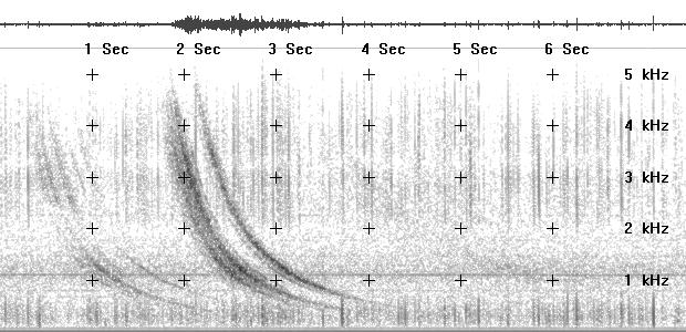 Spectrogram JPG image of strong whistler