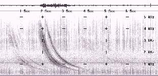 Spectrogram image of loud Nevada whistler